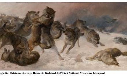Manchester Museum Launches 'From The War of Nature' Exhibition