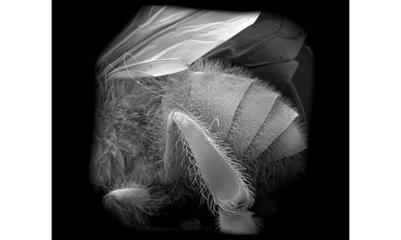 After the Bees – A Fable for Tomorrow