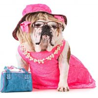 Legally Blonde The Musical comes to the Palace Theatre Manchester