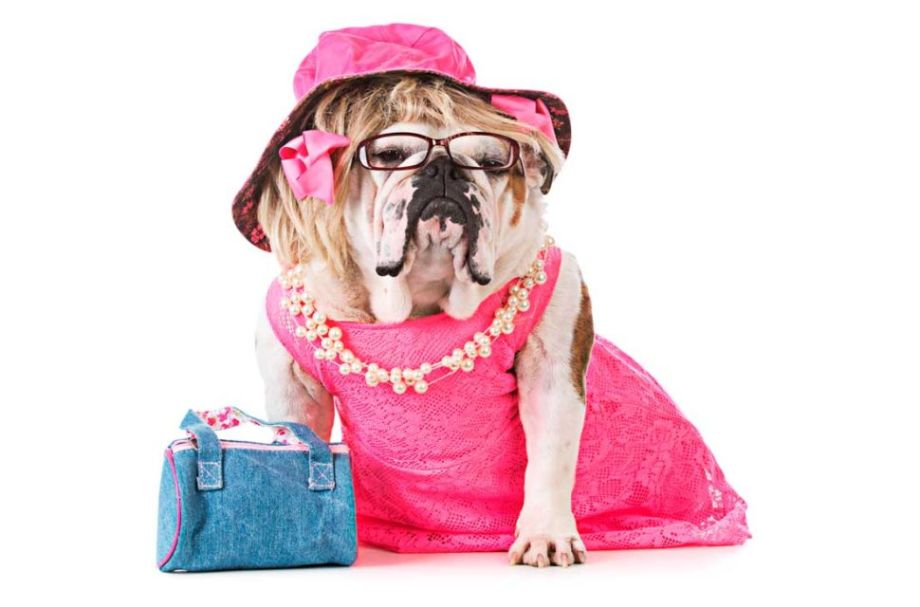 Could your dog appear in Legally Blonde at the Palace Theatre?