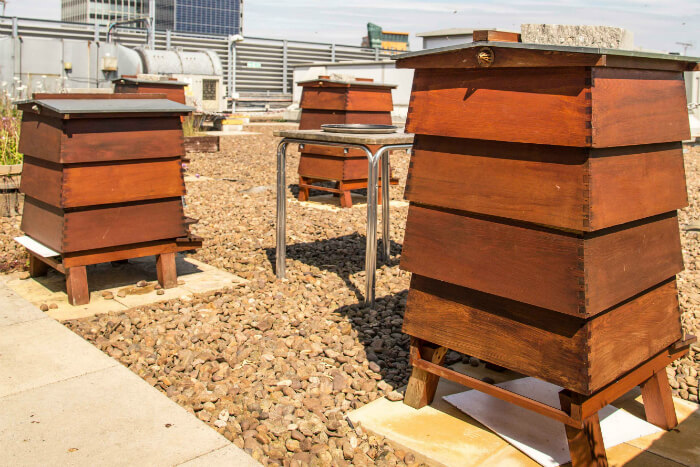 Adopt a bee at the Printworks