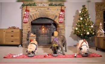 Manchester Dogs Home - Christmas