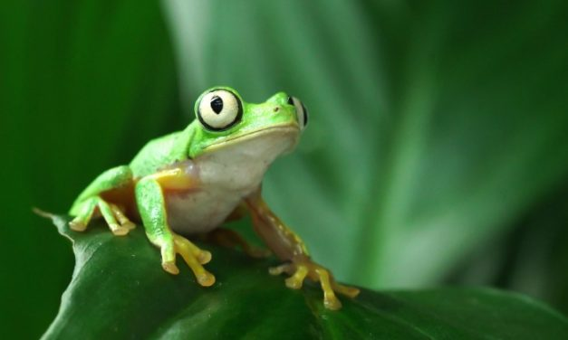 Frog Friday is coming to Manchester Museum online