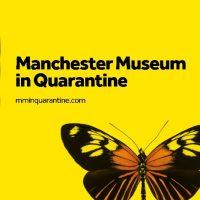 Manchester Museum in Quarantine