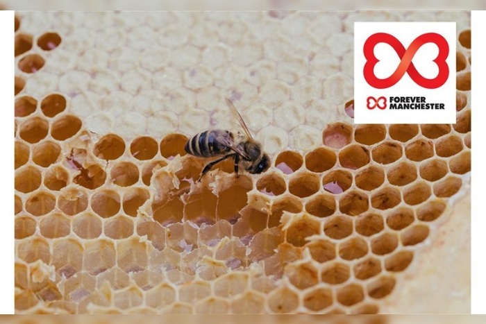 The Printworks launches Adopt a Bee campaign